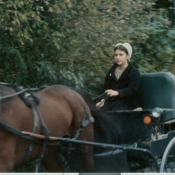 Amish girl in buggy